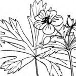Group logo of Herbalists